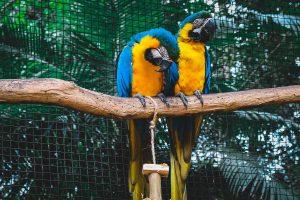 O que fazer quando uma ave apresenta quadro de emergência respiratória?