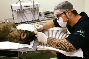 Coelhos e roedores precisam, sim, de cirurgia buco-maxilar