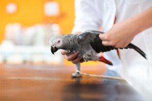 Desafios da cicatrização óssea adequada em aves serão abordados por Plinio Mantovani